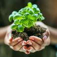 Sustainability at the Forefront